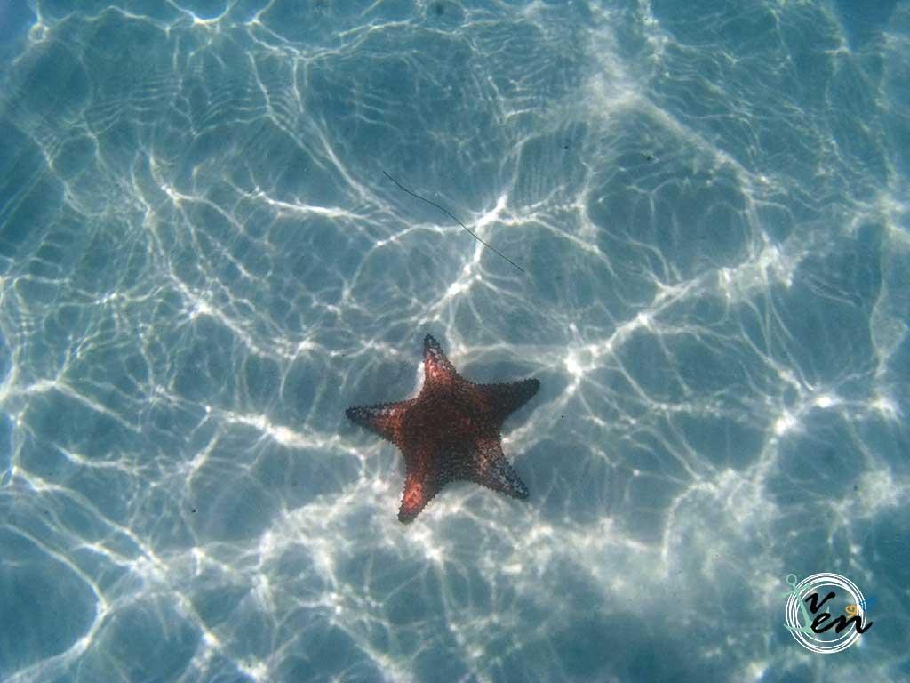 cayo-jutías--una-playa-paradisíaca-en-Cuba